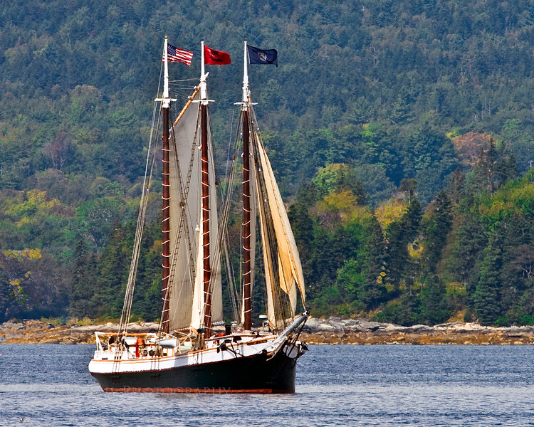 """Schooner, Victory Chimes as it sails the Eggemoggin Reach towards the Windjammer Rendezvous. For more info about this beautiful vessel go to  <a href=""""http://www.victorychimes.com"""">http://www.victorychimes.com</a>."""