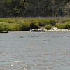 Boat wreckage in the Frederica River. Boat towed to site and sunk. It will deteriate until the mass is underwater and boats will run into it. There are no markers letting people know this wreck is there. 04-29-09