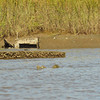 Boat Wreck in Frederica River 10-03-10 Vessel is slowly wasting away