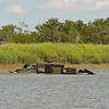 Boat Wreck in Frederica River 06-21-10 Vessel is slowly wasting away
