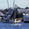 Shrimp Boats of the Golden Isles - Jean M Sunk