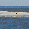 Sunken sailboat at high tide offshore Altamaha Sound, Georgia. TowBoatUS Brunswick rescued the man on board during the night that the vessel grounded further offshore. Vessel sank within minutes of man's extraction.