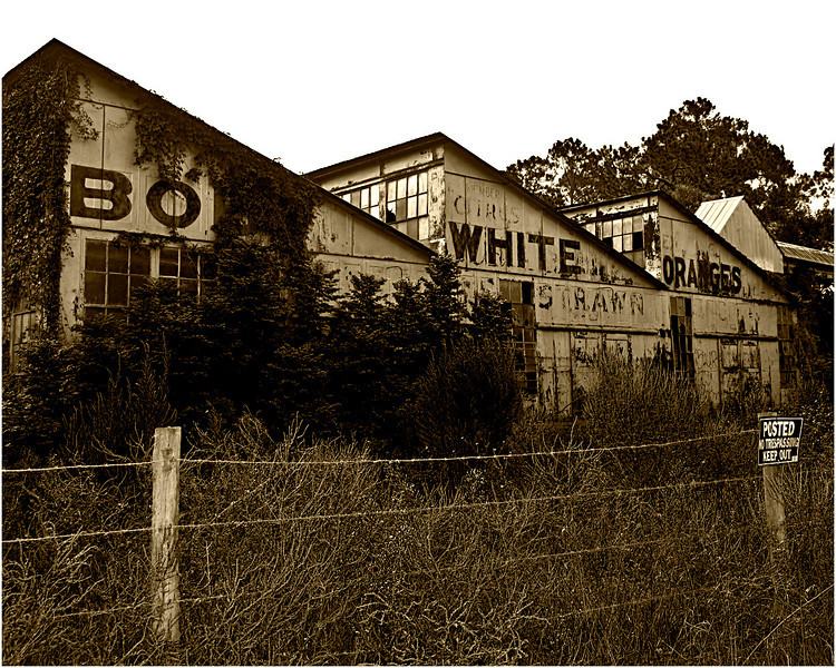 An orange packing plant - built in the 1920s - just north of DeLeon Springs, Florida.