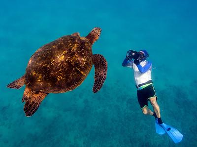 bob & turtle 5-14