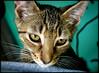 p1070323_KathyLeistner_070914_Snapseed