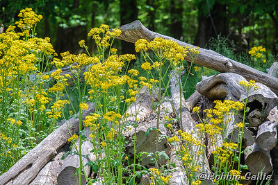 """©Bobbie Gallia; """"Suwanee Springtime""""; Bobbie took this cheerful photo in southeastern Tennessee, near  Monteagle, at the Smoke House restaurant. We were on an RV trip to Tennessee, Georgia, Florida and back home in May, 2014."""