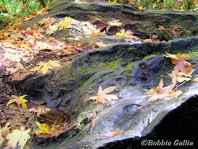 "©Bobbie Gallia; ""Fall Beauty""; Fall leaves on log at Big Tree Waypoint, Prairie Creek Redwoods State Park, California, about 1 mile north of the Visitor's Center."