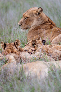 Avoca Pride Cubs