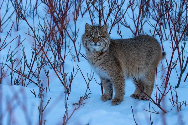 Genetic Sampling and Wildlife Conservation Efforts