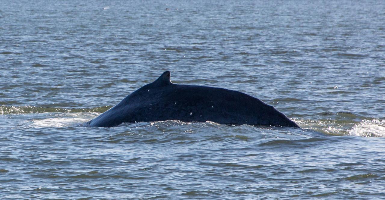 B-whales5-Juneau-5828