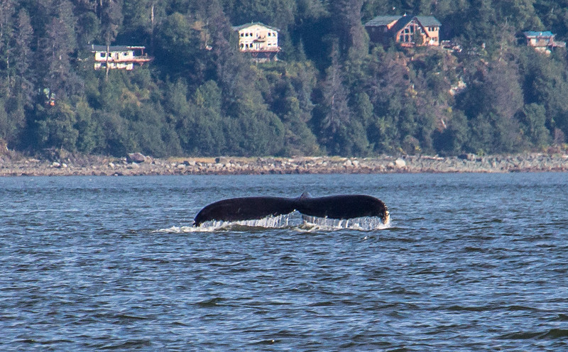B-whales7-Juneau-5760
