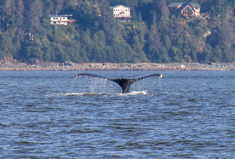 B-whales8-Juneau-5761