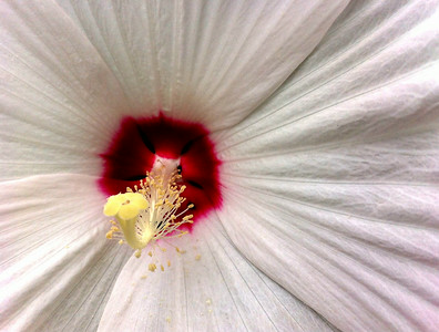 Better Flower1216