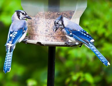 birds_printed