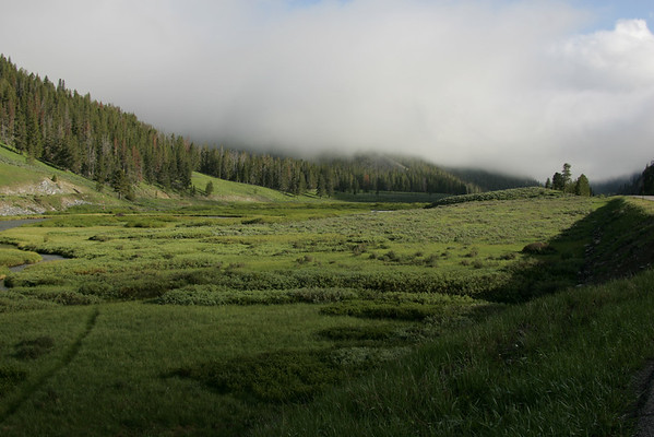 Foggy Morning at Yellowstone National Park