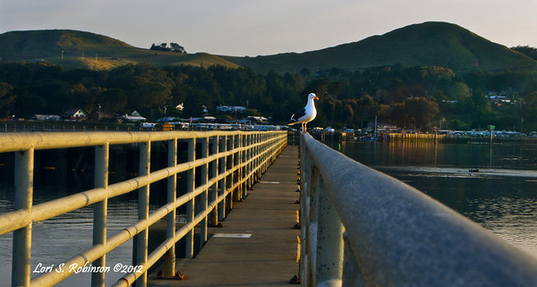 Jetty Lookout, Bodega Harbor at Sunrise. 4-8-12