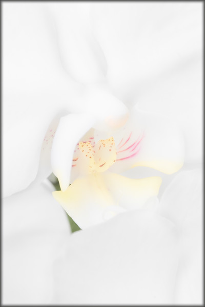Phalaenopsis in High Key. Accepted into the 56th Annual All Florida juried competition in the Boca Raton Museum