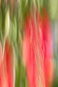 Diffusion - Bottle Brush Blossom with Intentional Camera Movement