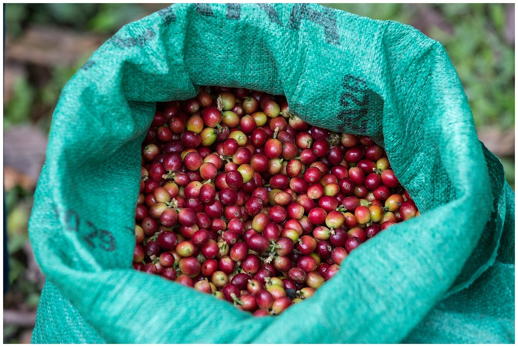 Don Manolo Coffee Farm