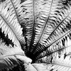 Depth of a Fern