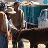 Donkeys for sale.