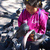 Feeding the pigeons.