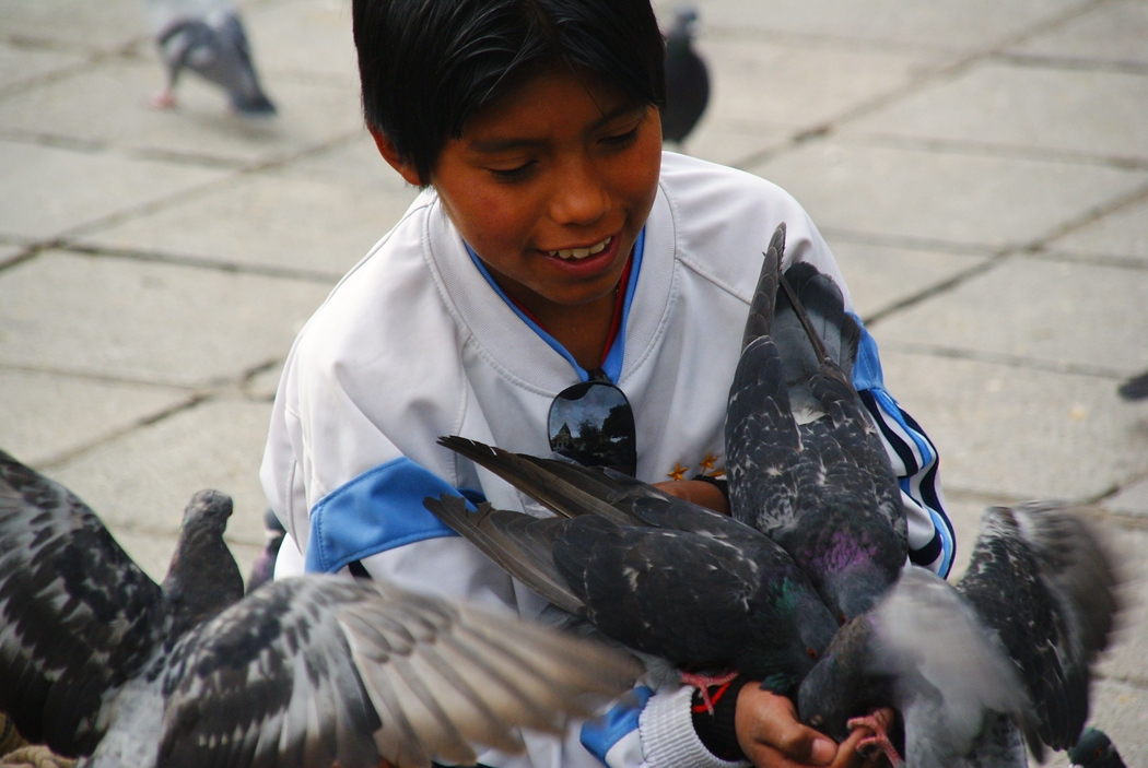 A boy ecstatically feeding pigeons - La Paz, Bolivia.  This is a travel photo from La Paz, Bolivia.