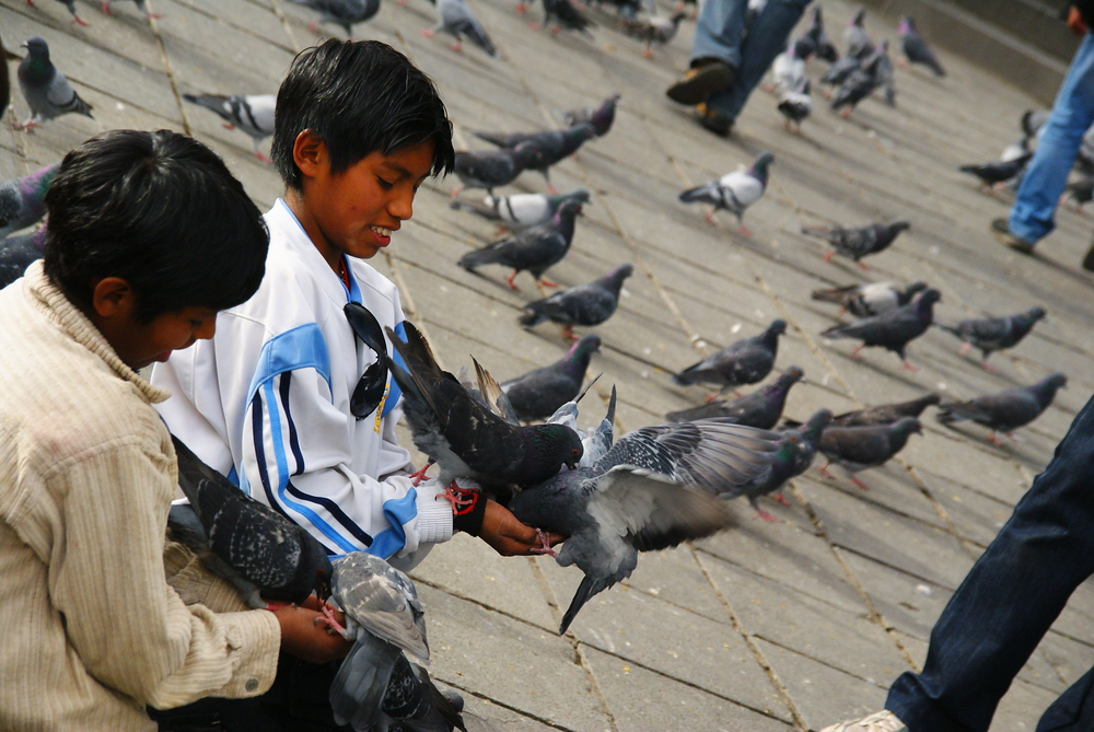 Today's daily travel photo is of a couple Bolivian boys feeding perched pigeons with feed in their hands from  in downtown La Paz, Bolivia.