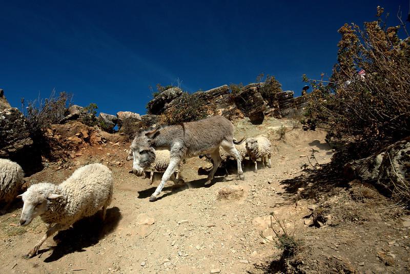 Convoy of animals.
