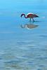 Flamingo at Laguna Hedionda