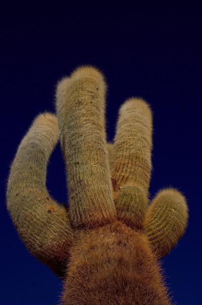 Cactus into the sky.