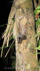 Tarantula, Serere Reserve