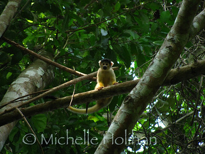 Squirrel Monkey, Serere Reserve