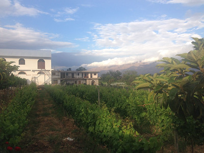 Wine district Tarija