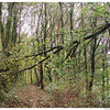 Bos na de storm,  Delftse Hout