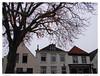Oude kastanjeboom, Zwartewaal