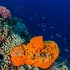 Jerry's Reef, Klein Bonaire