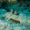 Flounder eyes