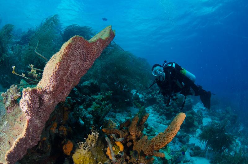 Linda on the reef