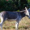 Donkey in someone's back yard
