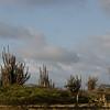 Typical Bonairian landscape