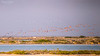 Life in the Salt Pans