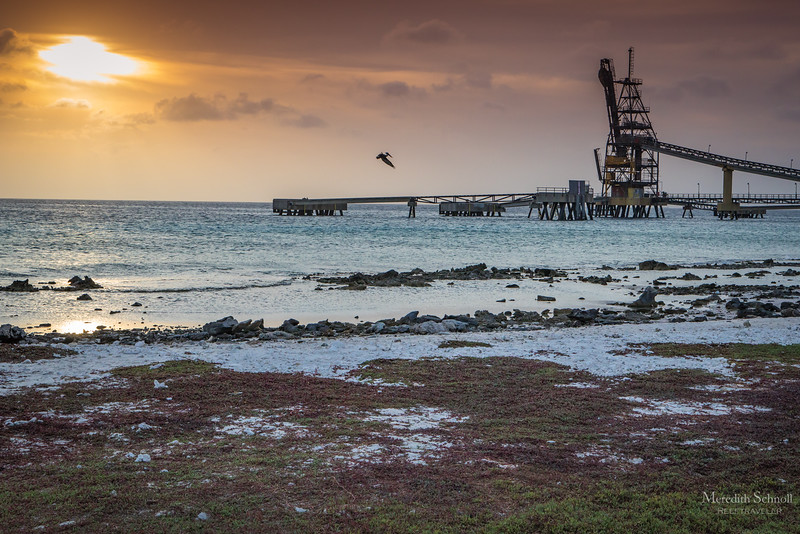 Pelican over the Salt Pier