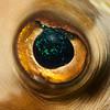 Close-up of fish eye