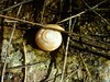 Snail shell at the waterfall.  Lakeview Mountains, 12 Dec 2004