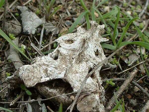 Rabbit Sacrum. Lakeview Mountains, 23 Feb 2003