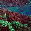Underwater vegetation view, Rio Sucuri, Bonito, Brazil.