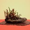 A fern on a stone