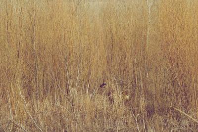 Deer in Woods New Mexico
