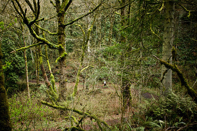 Trail Runner, Forest Park, Portland, Oregon